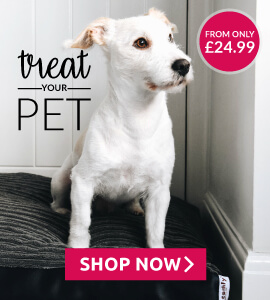 Treat your pet to a new dog bed