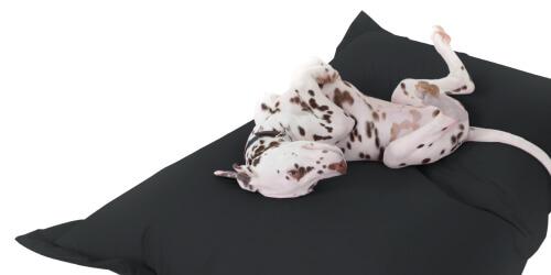 Indoor/outdoor memory foam dog bed